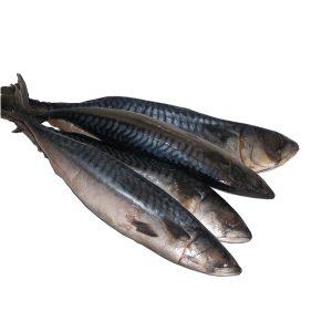 Titus Fish/kilo