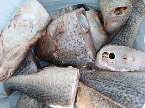 Crocker Fish - Carton