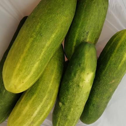 Cucumber N50