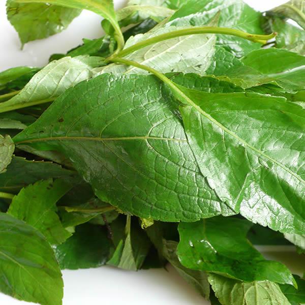 Scent Leaf (Efinrin) 1 Bunch
