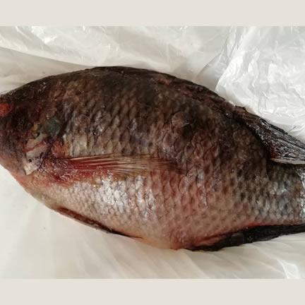 Tilapia Fish/kilo